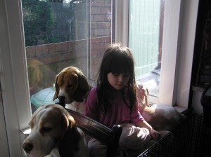 Child in window with beagles