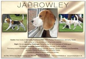 jarrowley_Advert